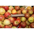 Pommes Boskoop le kg